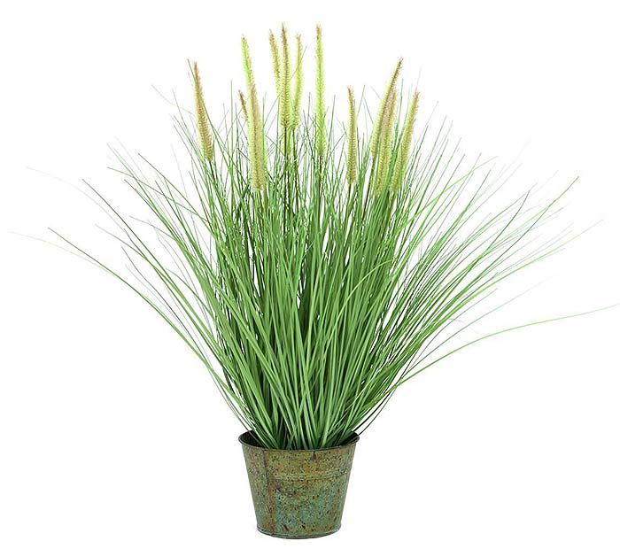 Decorative Grass in Pot - 70cm