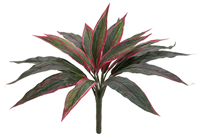 Green and Red Dracena Plant