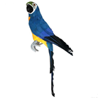 Blue Tropical Parrot - 42cm