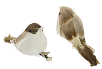 Brown Feather Birds - Pk.2