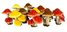 ASSORTED MUSHROOMS/TOADSTOOLS