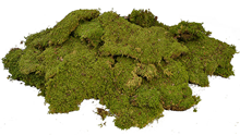Premium Quality Flat Moss Pieces
