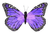Purple Feather Butterfly - 30cm