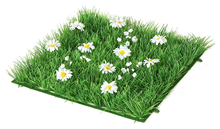 Grass Square with Daisies - 24 x 24c