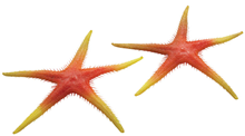 Plastic Starfish - Orange 25cm Pk.2