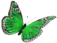 Green Feather Butterfly - 30cm