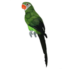 Green Tropical Parrot - 34cm