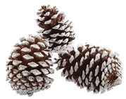 Large Frosted Pine Cones - Pk.3