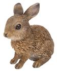 Baby Hare - Leveret