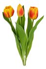 Flame Life-like Tulips, Pk.3