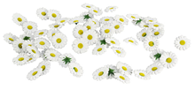 Scatter Daisies - White