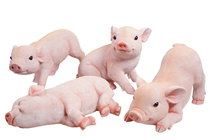 Piglets - Set of 4