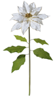 Giant White Poinsettia