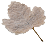 Large Frosted Leaf - Buff