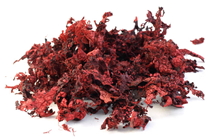 Scatter Moss - Red