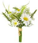 Posy of Marguerite Daisies