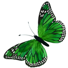 Green Feather Butterfly - 76cm