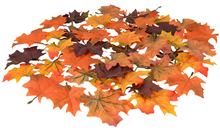 Autumn Maple Leaves - Pk.48