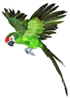 Large Green Flying Parrot