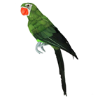 Green Tropical Parrot - 42cm