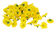 Scatter Flowers - Yellow