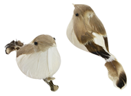 Brown / White Feather Birds - Pk.2
