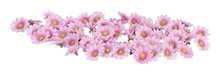 SCATTER FLOWERS - PINK