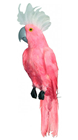 Pink Cockatoo with White Crest - 50cm