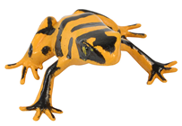 Fake Yellow and Black Tree Frog