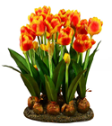 Artificial Tulip Display