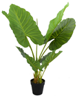 Pothos Plant in Pot - 80cm
