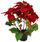 Red Potted Poinsettia - Slight Second