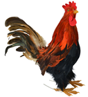 Rooster - 35cm