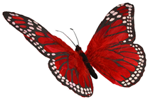 Red Feather Butterfly - 30cm