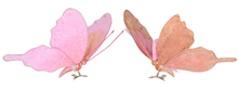 Vintage Style Pink Butterflies - 20cm