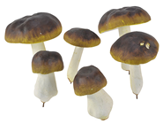 Wired Mushrooms, Pk.6 Assorted