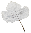 Large Frosted Leaf - Pearl