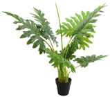 Split Philodendron Plant in Pot - 80cm