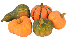 Selection of 5 Pumpkins and Gourds