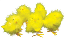 Yellow Chick - Pk.5