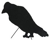 Silhouette Crow
