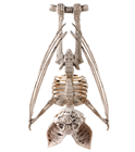Creepy Hanging Skeleton Bat